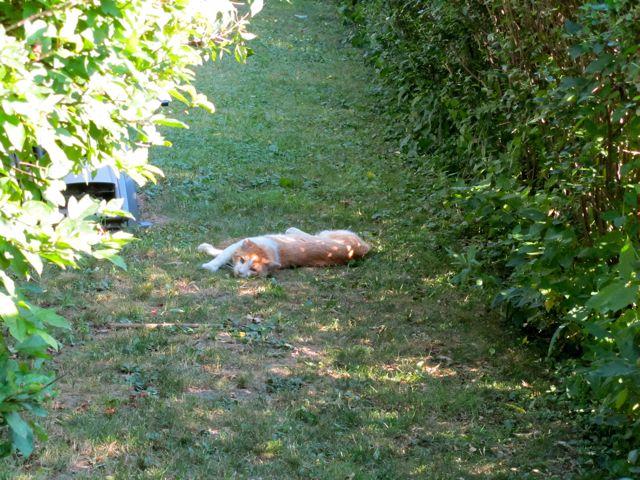 walking home cat nap