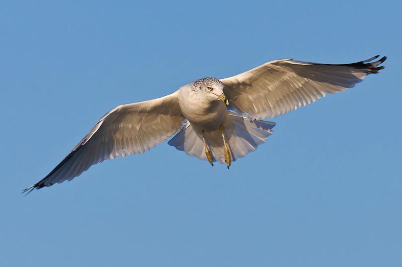 Seagull Antics
