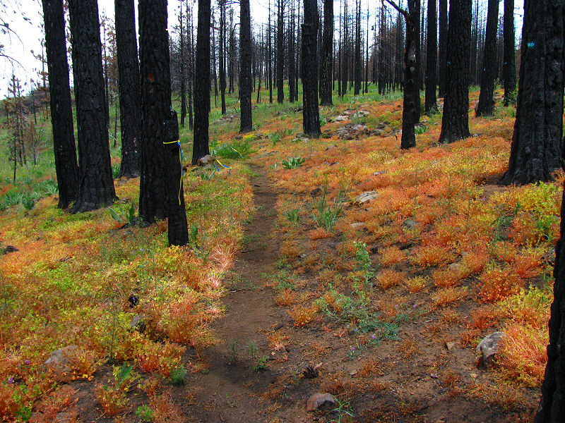 1Colorful Trail.jpg