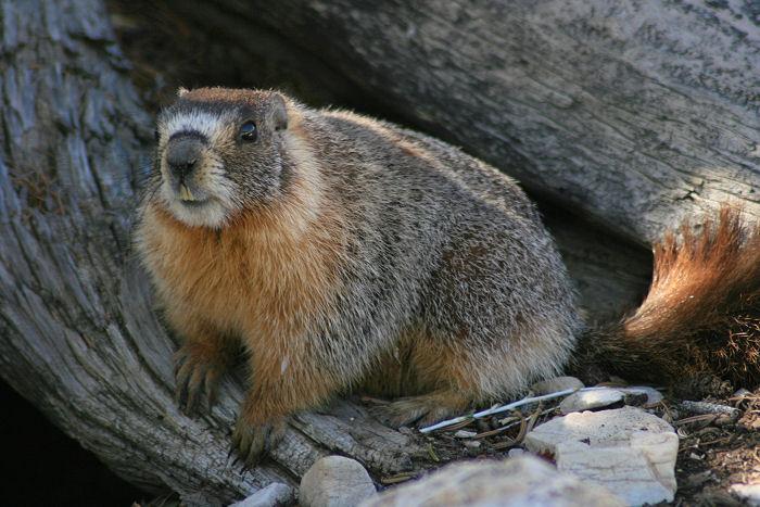 Marmot House