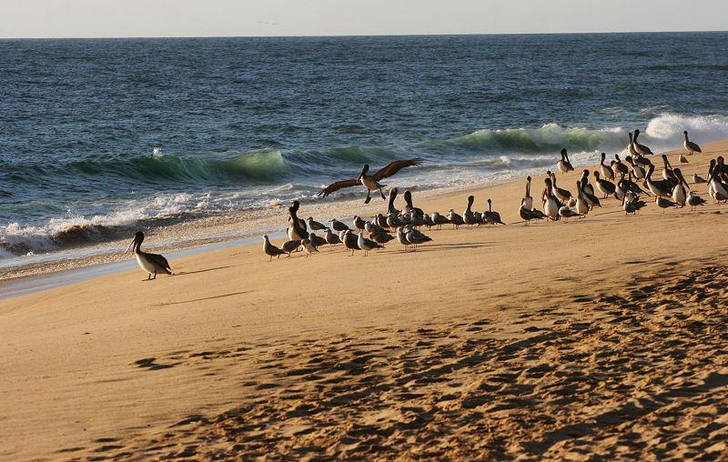 1Pelican Beach.jpg