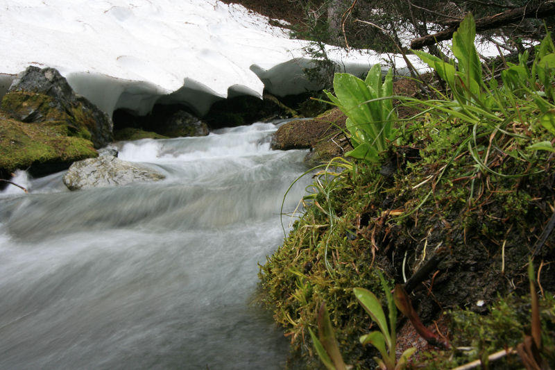 Snow Lingers at the Headwaters of the Entiat
