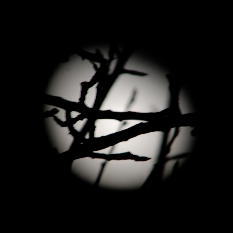 a moon in a pear tree