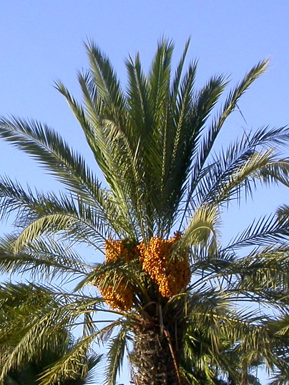 date palms down the dual carriageway