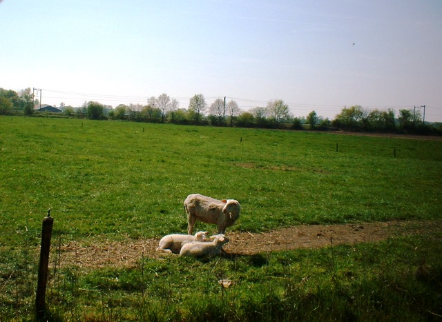 Eem Polder 30 April 2007