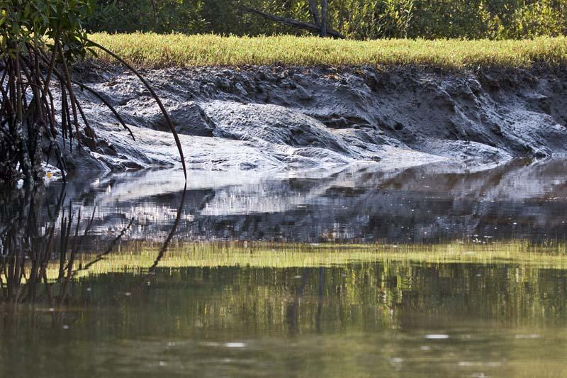 Mangrove Mud Bank