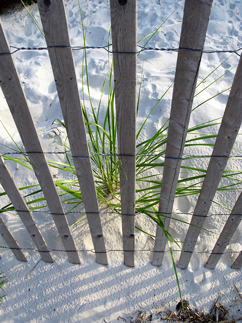 Fence and Beach Grass #1