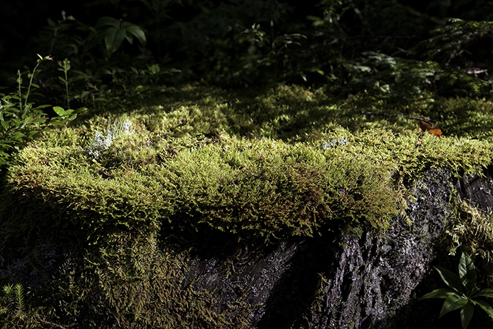 Moss and Lichens on Rock