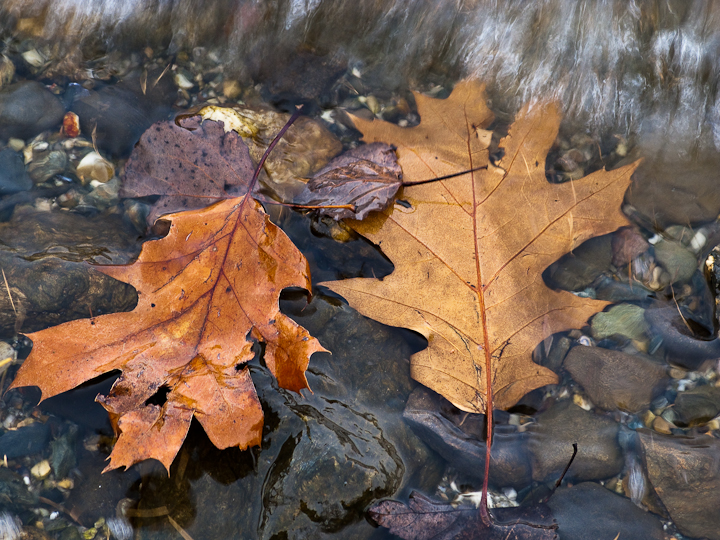 Leaves at the Waters Edge #1