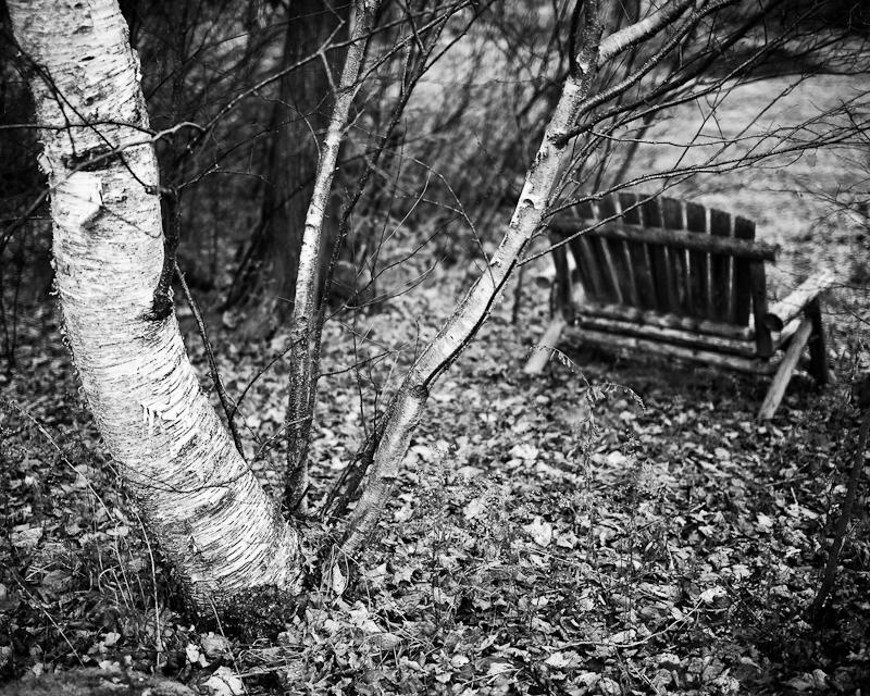 Birch and Bench