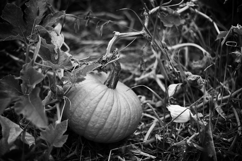 Pumpkin Monochrome
