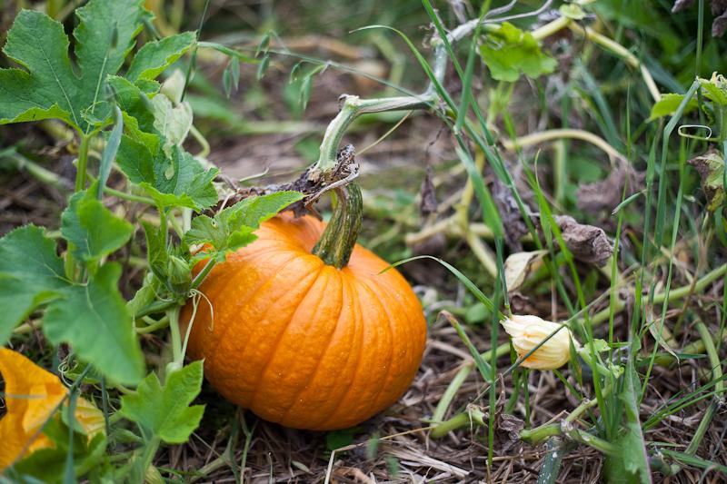 Second Pumpkin 2010