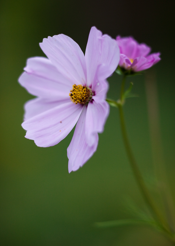 Open and Opening Cosmos