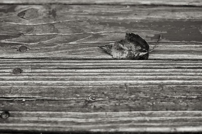 Fallen Leaf on Boards
