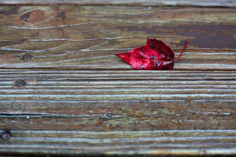 Red Leaf on Boards