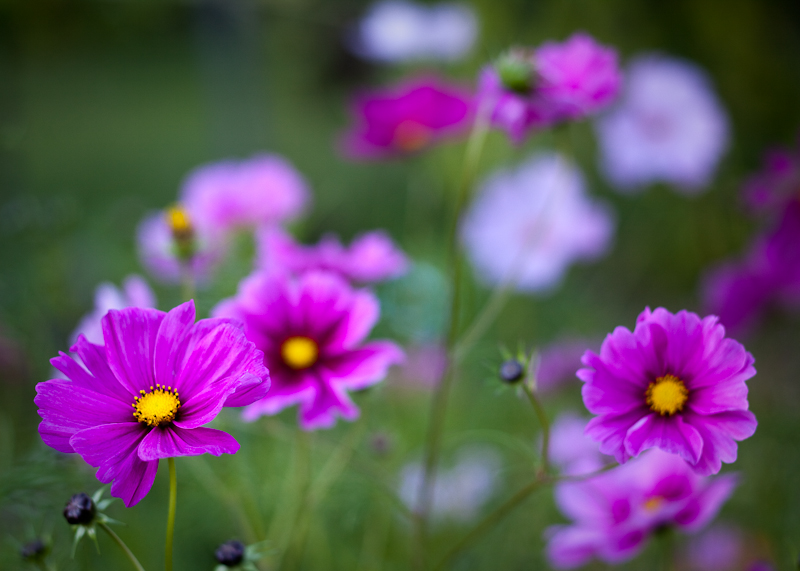 Group of Cosmos