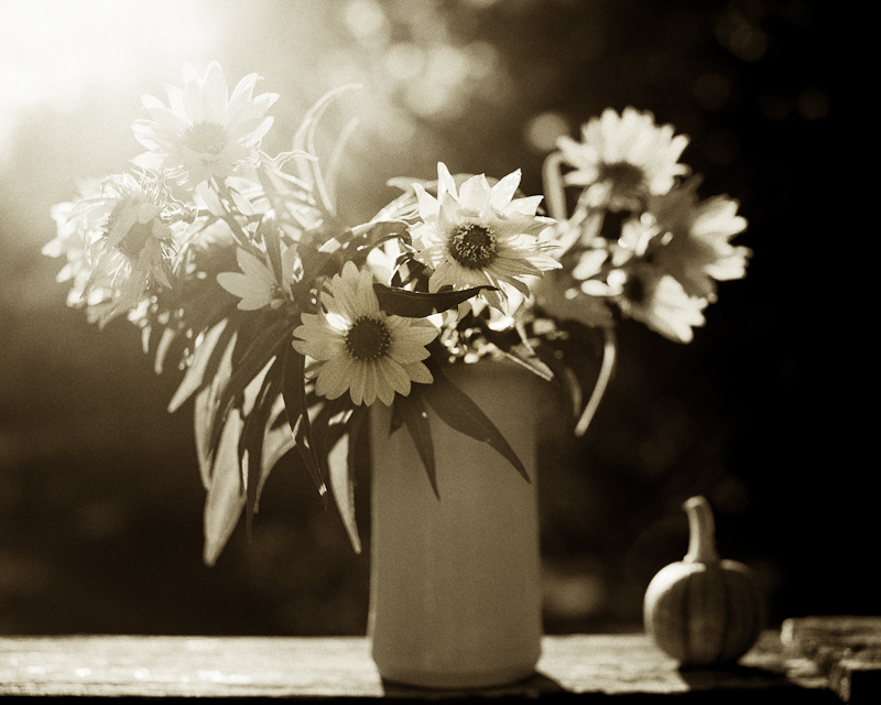 Backlit Little Sunflowers in Vase on Railing with Tiny Pumpkin