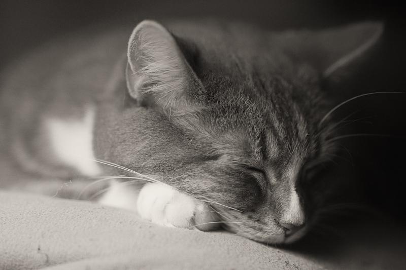 Jenni Sleeping