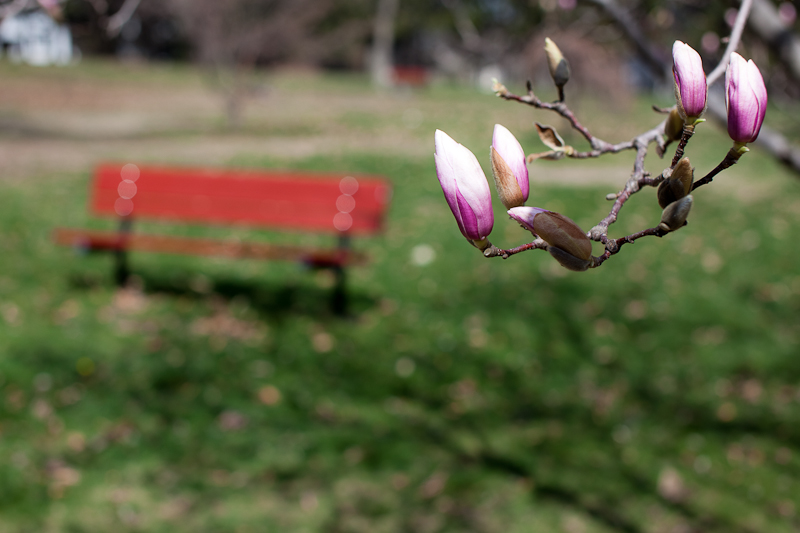 Tree Flowers and Bench