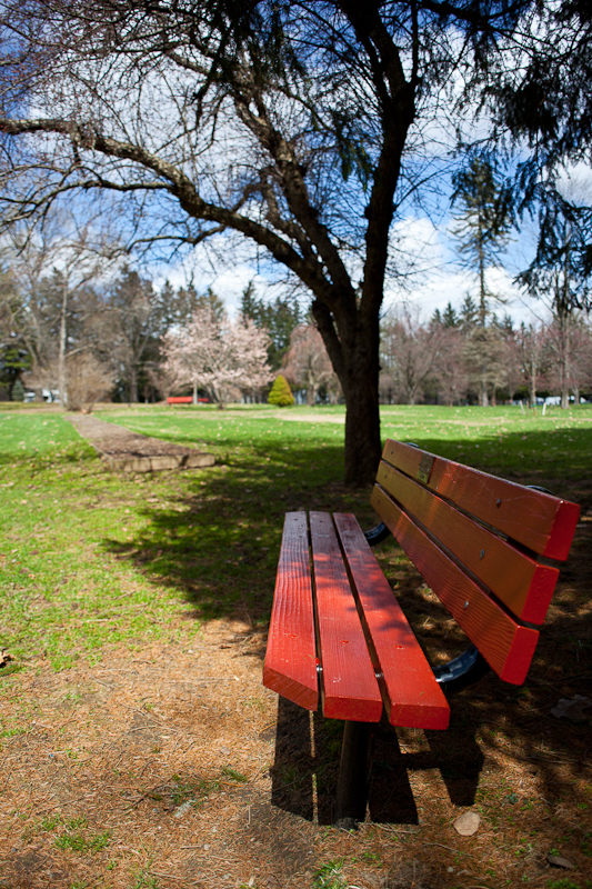 Red Bench and Lawn