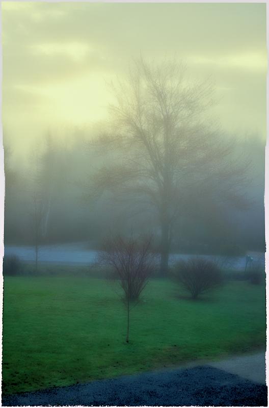 Foggy Morning Impression