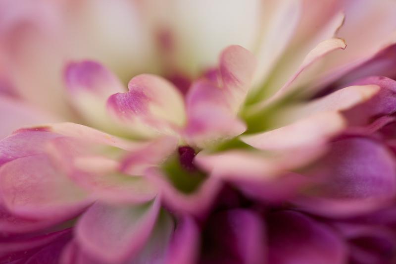Pink Macro Petals