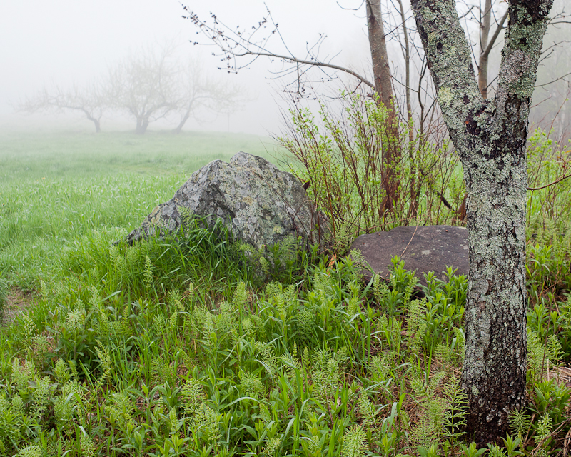 Foggy Day on Blue Hill Mountain #2