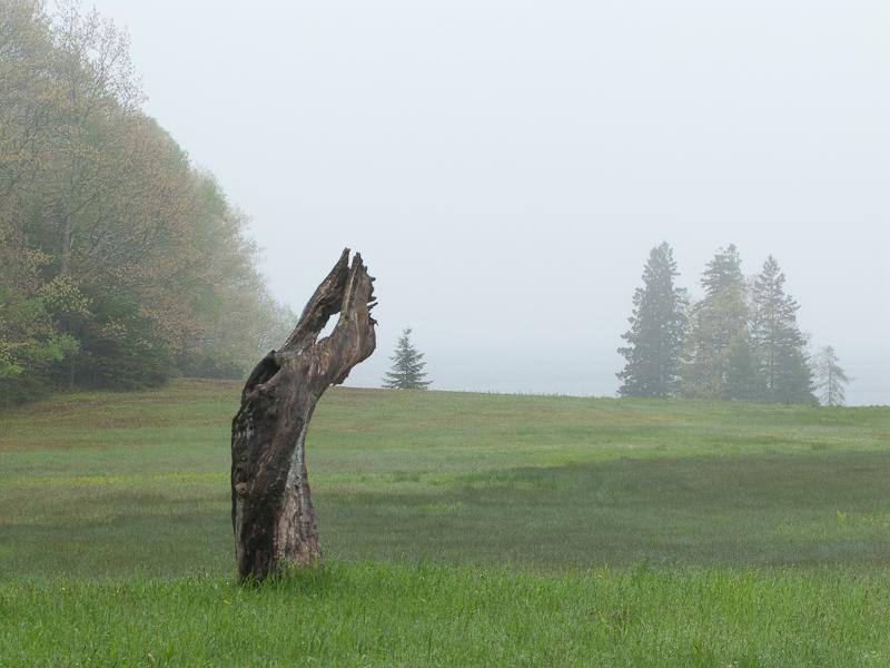 Natural Statue in Fog