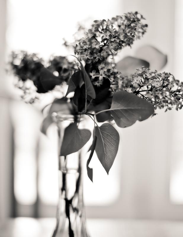 Monochrome Lilacs in Vase