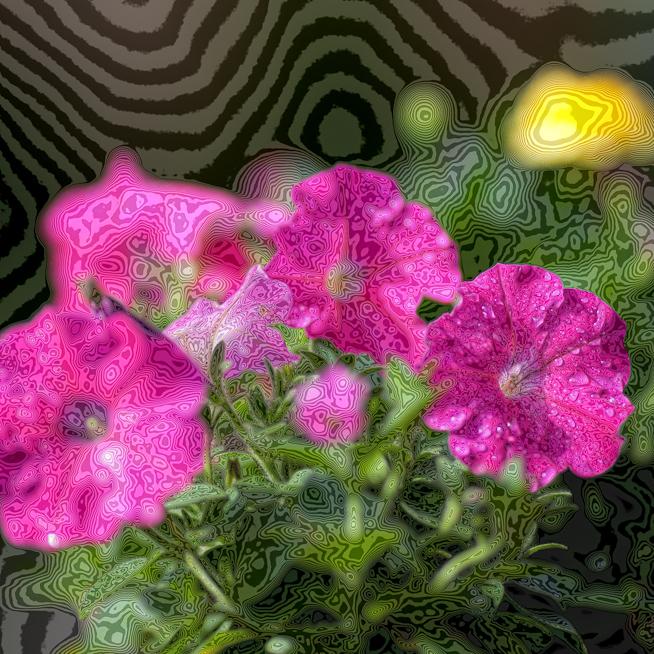 Psychedelic Rain-wet Petunias