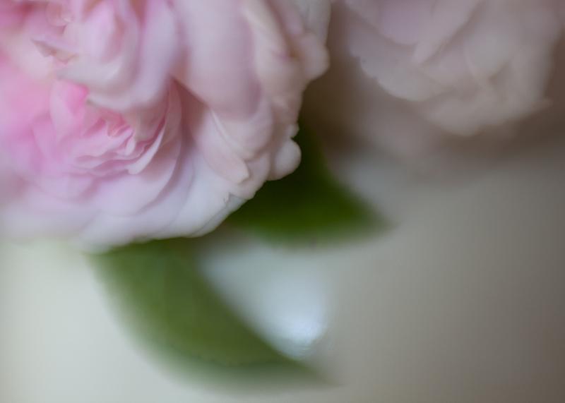 Tea Roses in a Vase #5