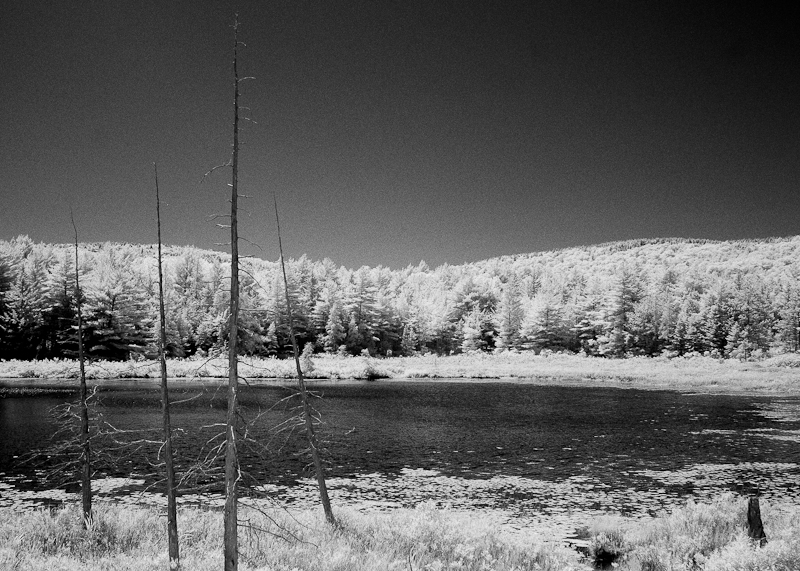 Dead Trees by Pond