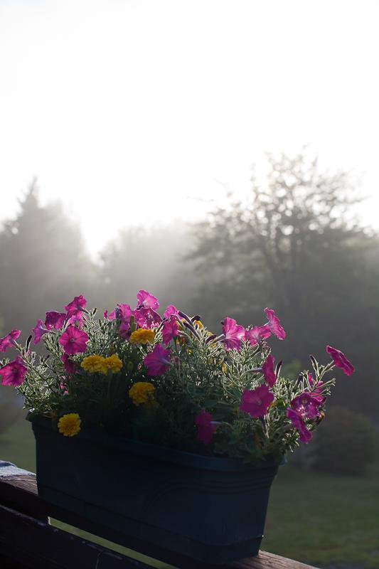 Foggy Sunrise Planter