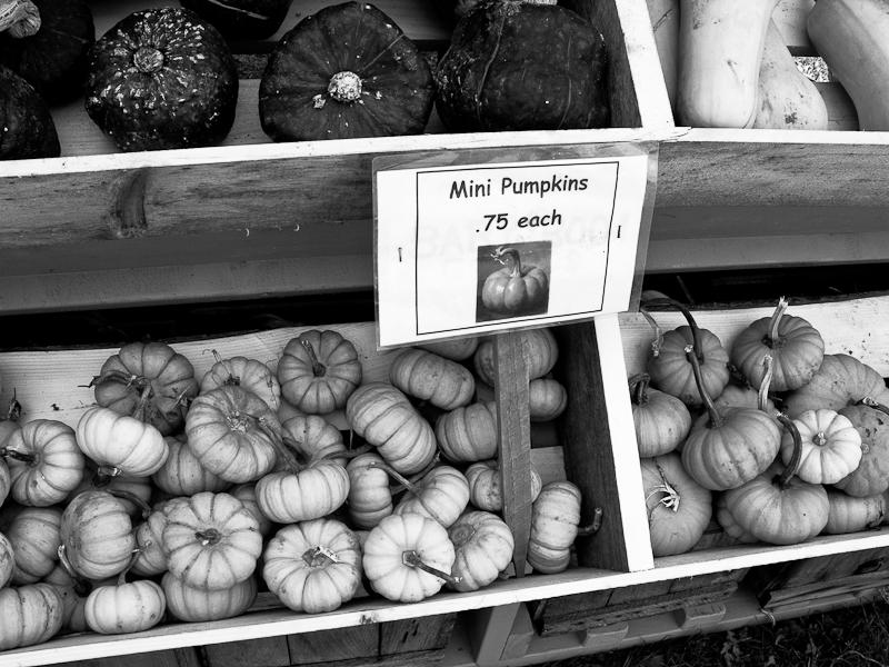 Mini Pumpkins .75 Each