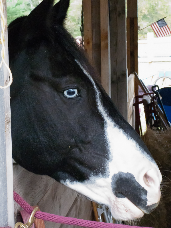Horse of Unknown Breed