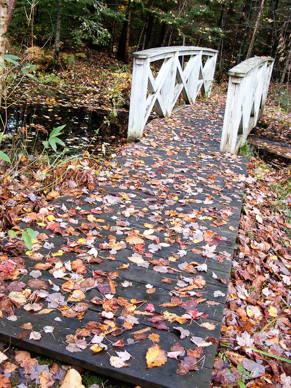 Little Bridge in Birdsacre #1