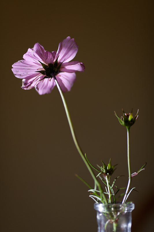 The Last Cosmo and Top of Vase