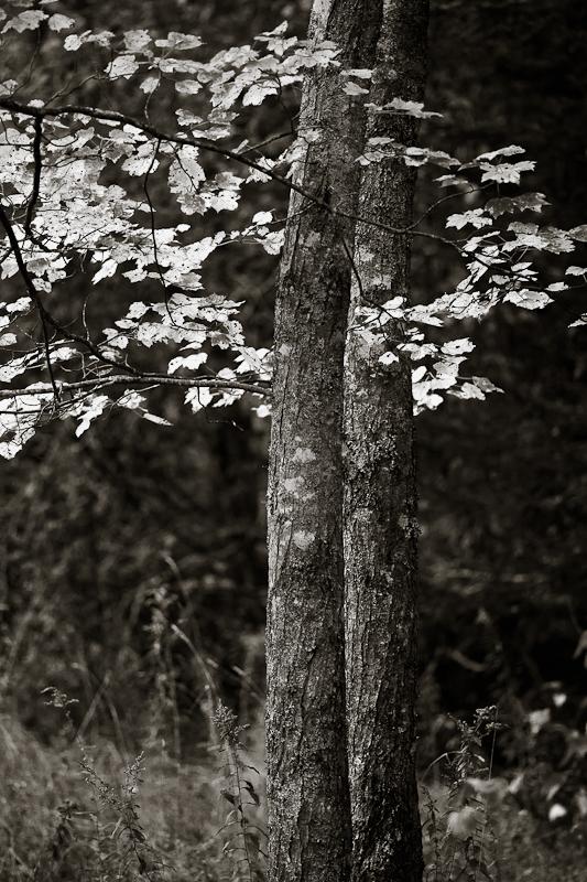 Bright Branches