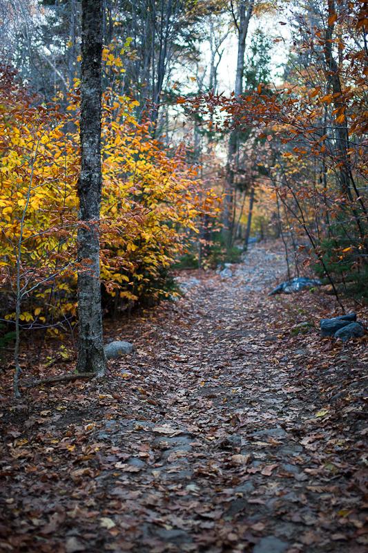 Blue Hill Mountain Trail #1