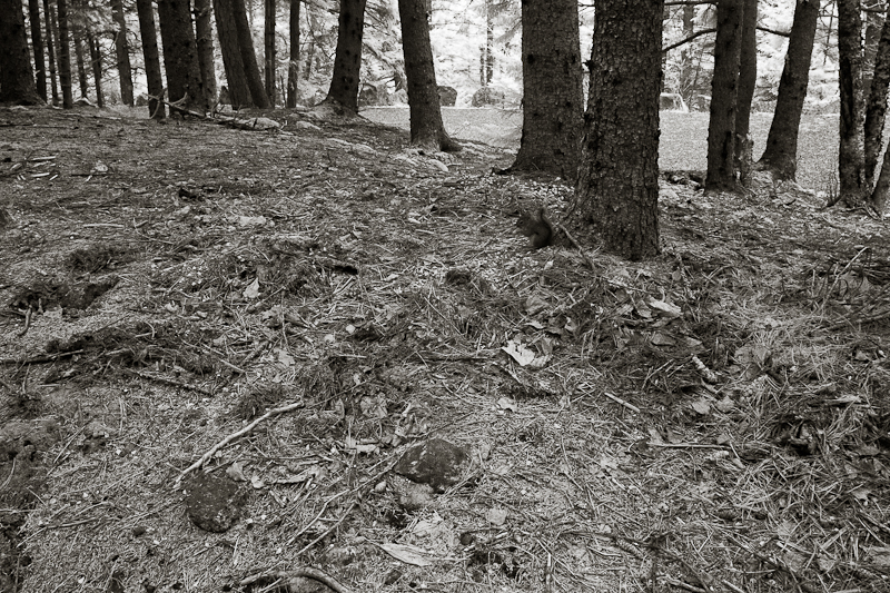 Trees with Fallen Leaves and Pine Needles #1