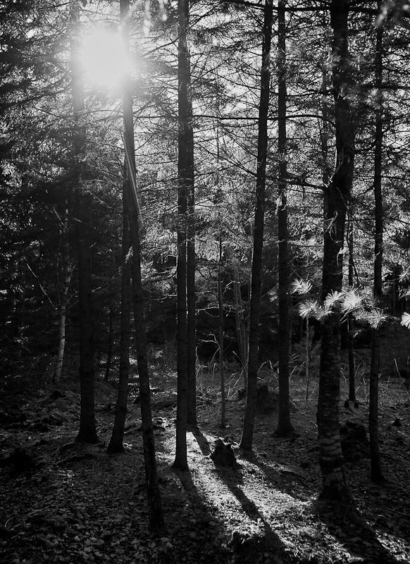 Backlit Tree Grouping