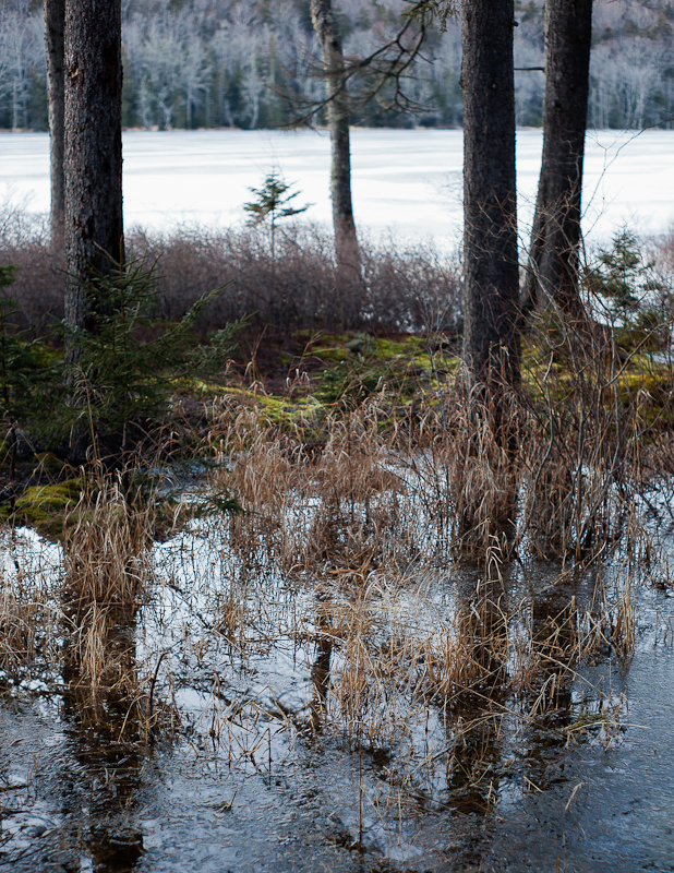 Little Long Pond Overflowed and Frozen #1