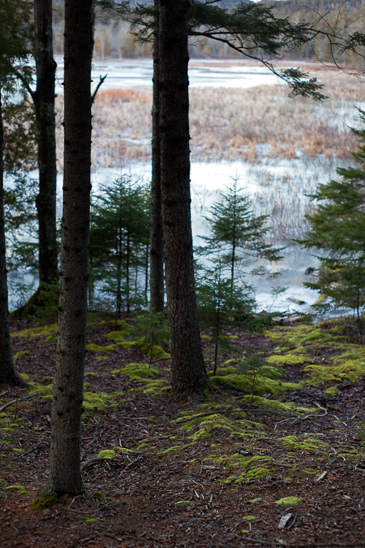 Moss and Trees by Frozen Field