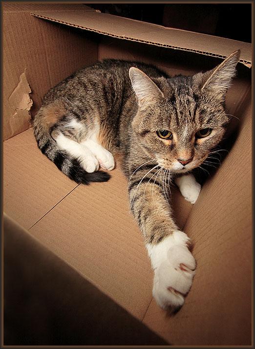 Feline Furniture