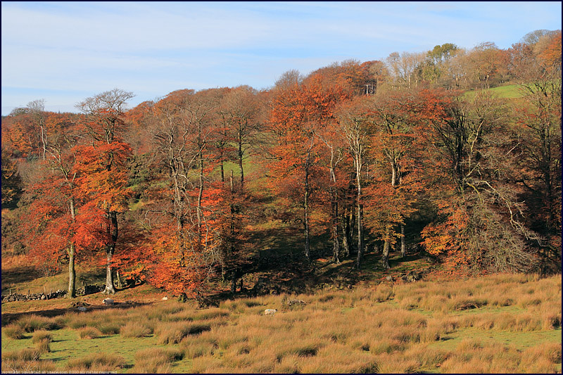 Crockern Valley, Dartmoor