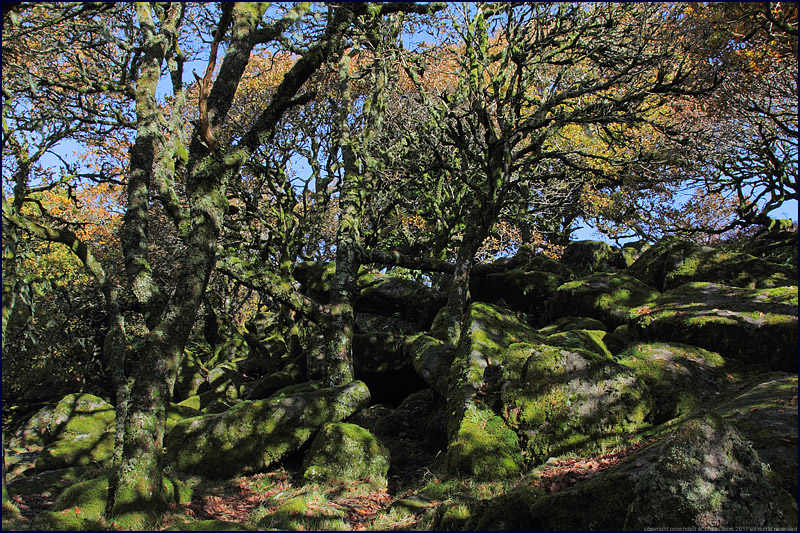Wistmans Wood, Dartmoor