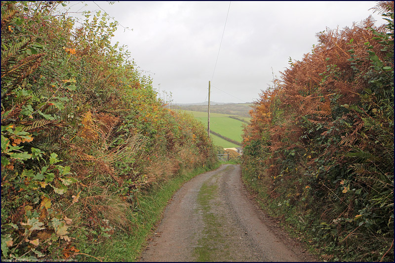 country lane, Devon