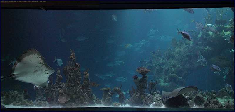 view into one of the tanks, the Deep