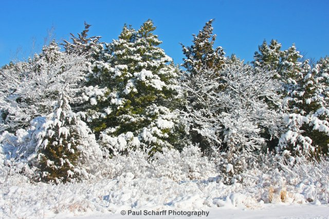 Sandy Hook Snowfall 2009 26.jpg