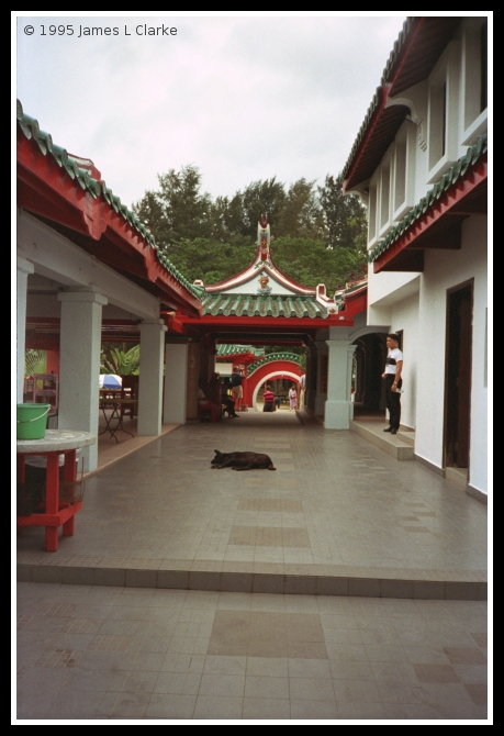 Dog at the Temple